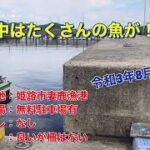 海中映像! 姫路市で海釣り!妻鹿漁港の港内にはたくさんの魚が!! チヌやシーバスは見当たらず・・・・ 令和3年8月下旬