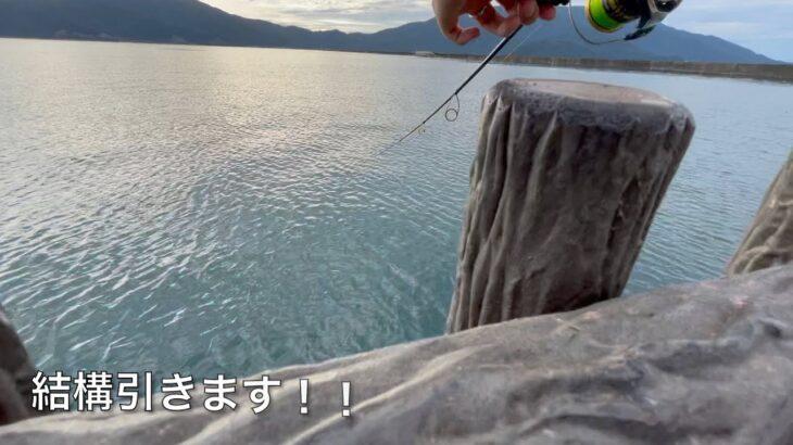 海釣りで高級魚GET!?in福井【後編】ダ○ソールアーが大活躍!?#福井 #ルアーフィッシング