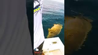 Ocean Fishing Bait 🎣 海釣り餌