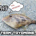 【岩手海釣り】釜石釣行 Vol.1