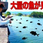 大量の魚が見える河口にルアーを投げ込むと!