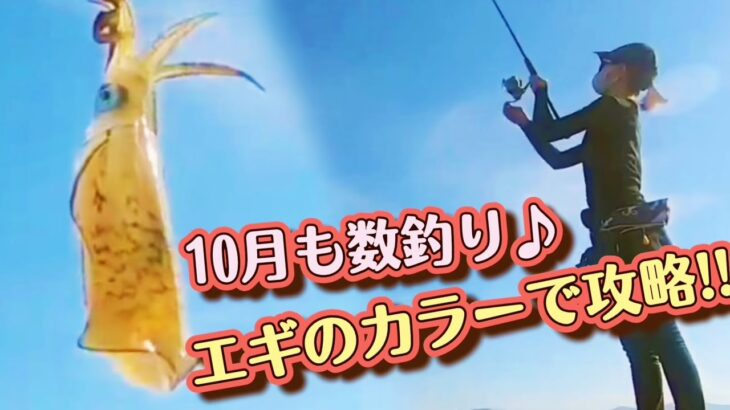 10月も数釣り♡ 素人がエギのカラーで攻略‼【エギング】【釣りガール】
