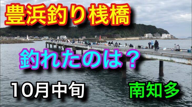 豊浜釣り桟橋で釣れたのは?10月の南知多