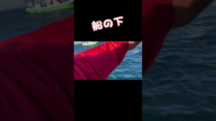 南房総の海上にて完結編!#海釣り #船釣り #青物 #青物釣り #ウィリー #daiwa #クロムハーツ #イナダ #魚釣り