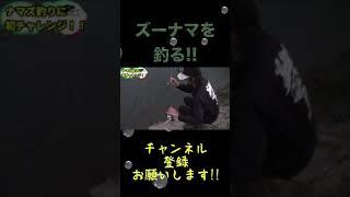 ズーナマを釣りたい!!#shorts【釣りよか切り抜き】