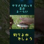 ヤマメを釣って大喜び!#shorts【釣りよか切り抜き】