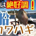 【三河湾】今年絶好調と噂のカワハギ釣りに行ってきた!【船釣り】