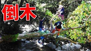【山復興】台風の被害で川に倒れた倒木を解体する!!
