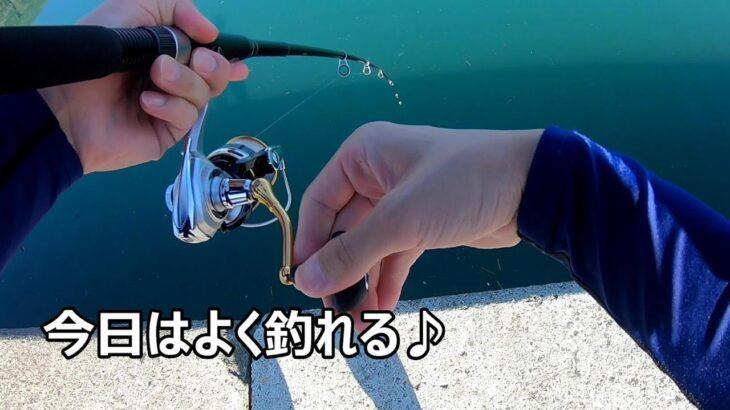 [海釣り] しばらく人が入らなかった釣り場で釣りをしたら爆釣だった!