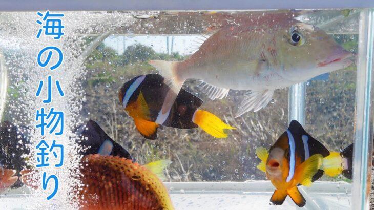 【海釣り】【小物釣り】カラフルなお魚さんが釣れました!