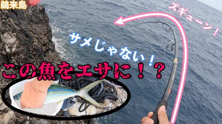 巨大魚を釣る!?磯釣りでルアーフィッシング!(2日目後編)