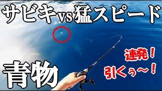 サビキ釣りで猛スピードで泳ぐ青物を狙ったら針がひったくられて大爆釣!名人を連れて穏やかな湾に漂う係留船!仕掛け・釣り方!食べます