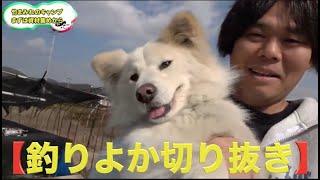 犬の散歩が楽しすぎた!!【釣りよか切り抜き】